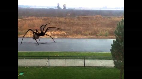 Giant Spider Attacks Person - YouTube