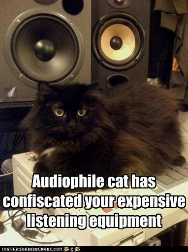 Audiophile cat has confiscated your expensive listening
