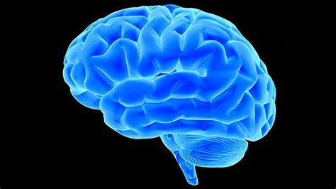 Could Brain Scans Help Guide Treatment for OCD? | Everyday