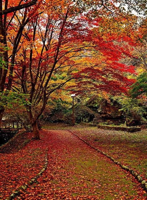 Red fall leaves trail by haru GTI on 500px