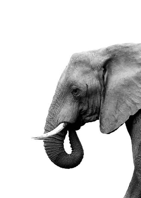 Elephant From Side Poster