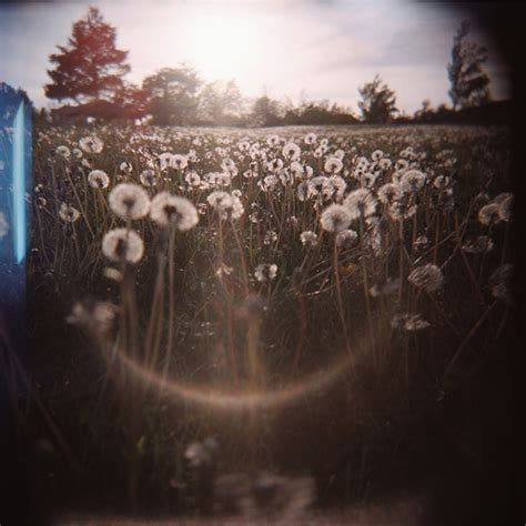 Top 10 Wired Holga Photos, Decided by You | WIRED