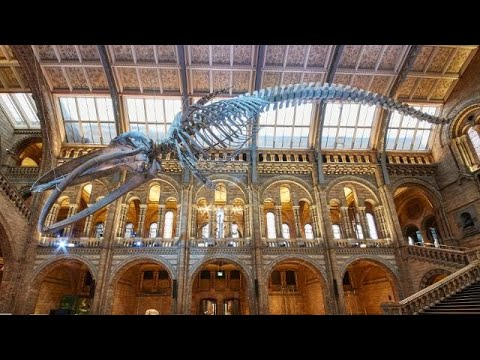 File:Natural History Museum, inside 2nd floor