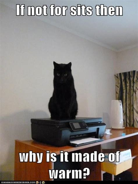 If not for sits then why is it made of warm? - Cheezburger