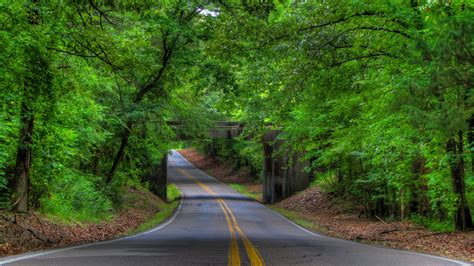 Free photo: Tree road - Forest, Green, Landscape - Free