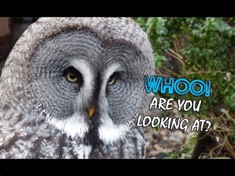 10 Cool Owl Facts - YouTube