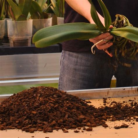 What Kind of Orchid Potting Mix Should You Use?