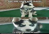Insanity Puppy   Know Your Meme