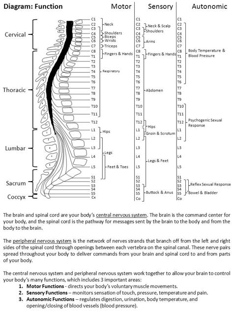 UAB - Spinal Cord Injury Model System - What is a spinal